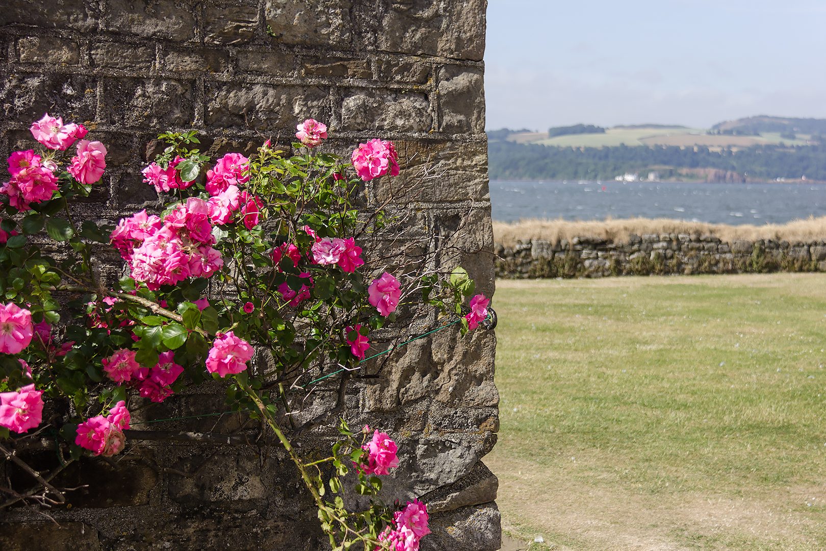 Flowers at Inchcolm Abbey