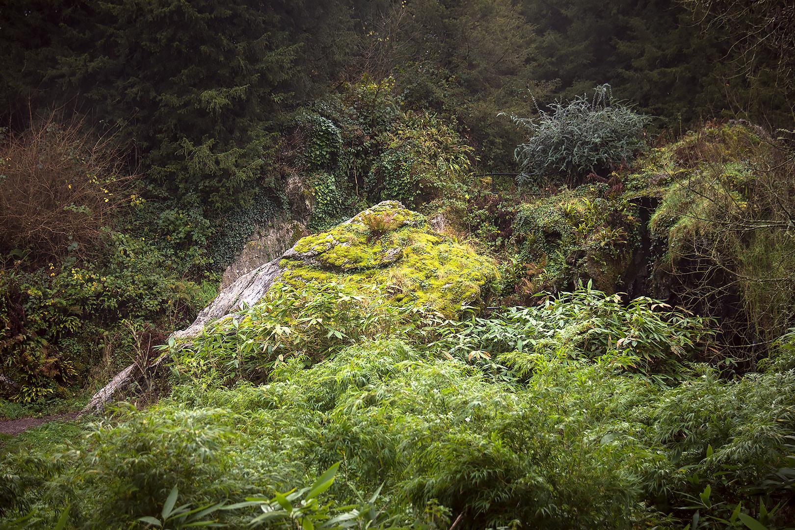 The bog garden, Blarney castle