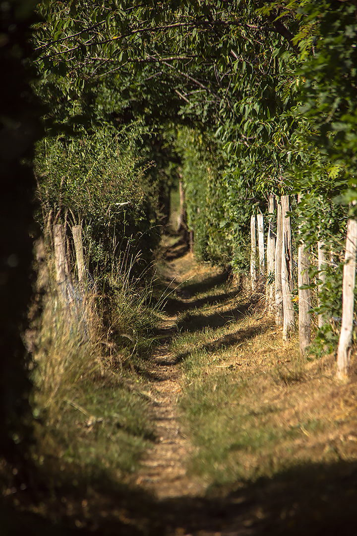 A country footpath in Kent