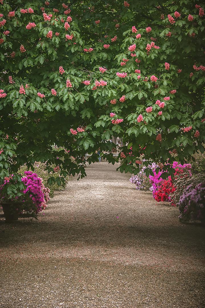 A path in the Giardino dei Semplici