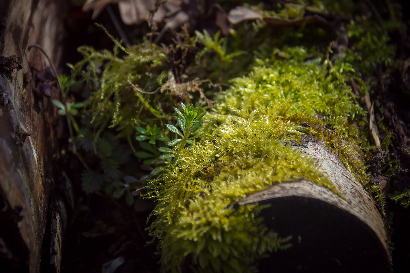 A detail of a small patch of moss